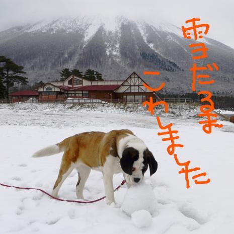 バーディ♪雪の大山12