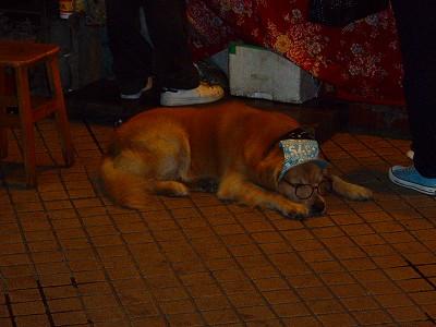 士林駅前犬