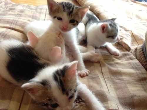 cat_etc001.jpg