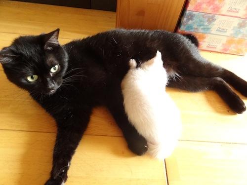 cat_etc005.jpg