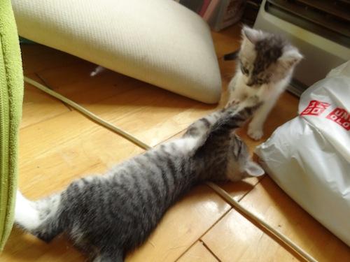 cat_etc007.jpg