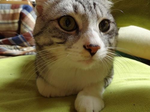 cat_etc009.jpg