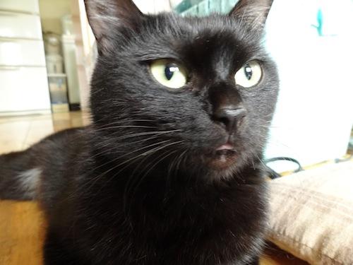 cat_etc011.jpg