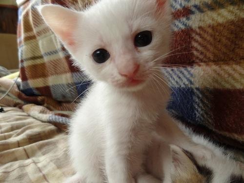 cat_etc015.jpg