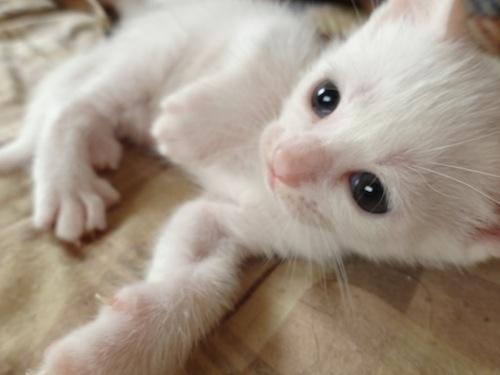 cat_etc017.jpg
