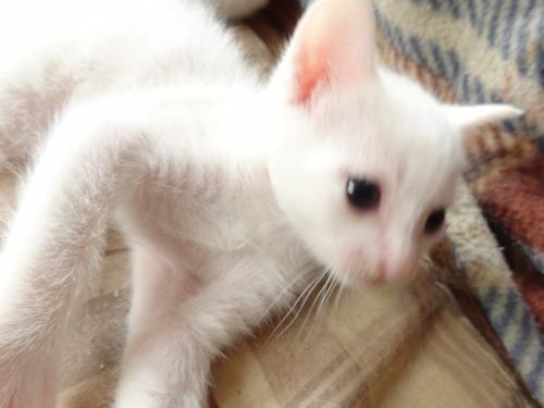 cat_etc021.jpg
