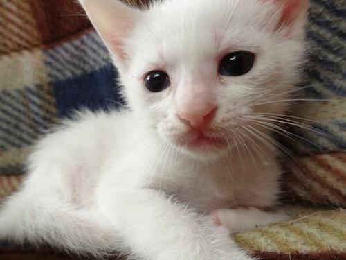 cat_etc022.jpg