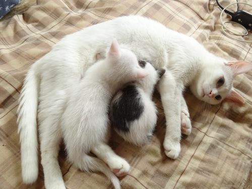 cat_etc023.jpg