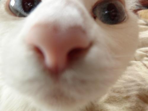 cat_etc024.jpg