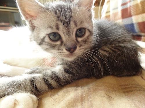 cat_etc026.jpg
