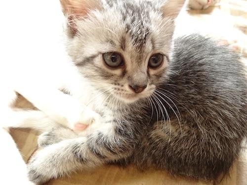 cat_etc027.jpg