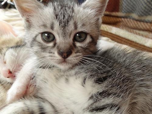 cat_etc030.jpg