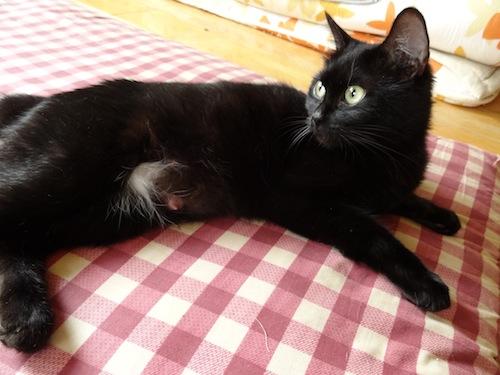 cat_etc033.jpg