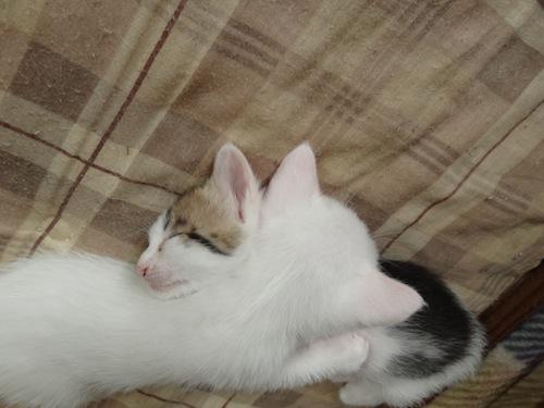 cat_etc037.jpg