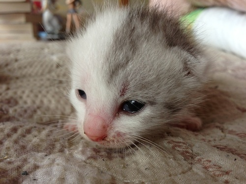 cat_etc038.jpg