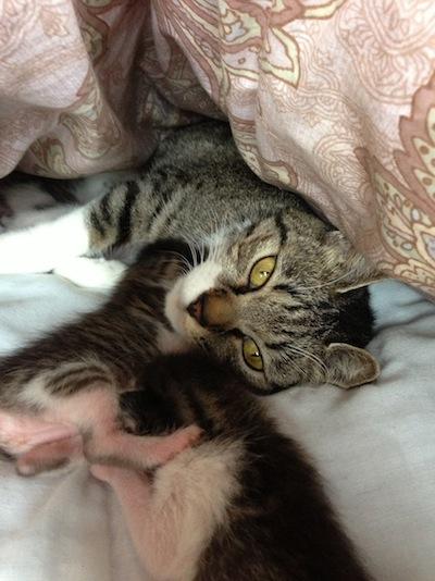 cat_etc039.jpg