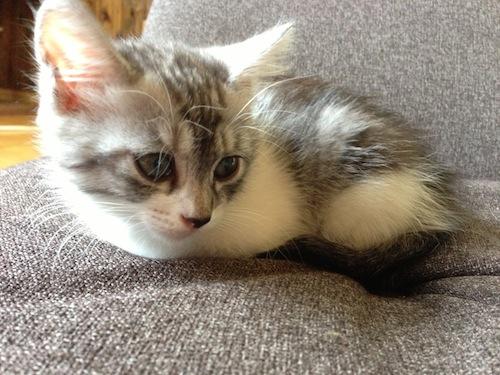 cat_etc048.jpg