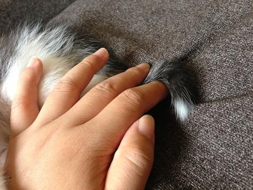 cat_etc050.jpg