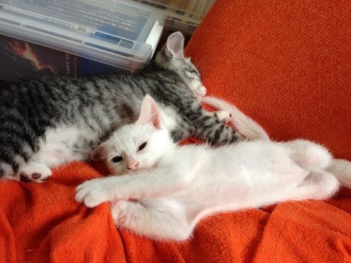 cat_etc052.jpg