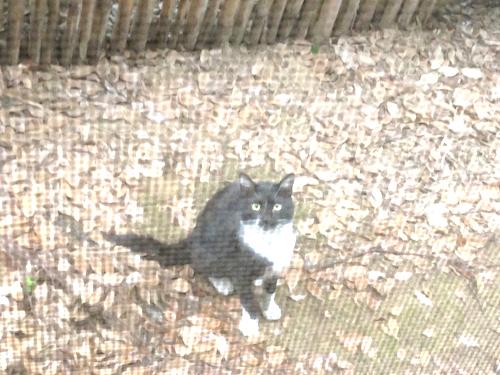 cat_etc063.jpg