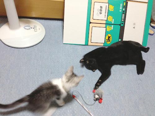 cats001.jpg