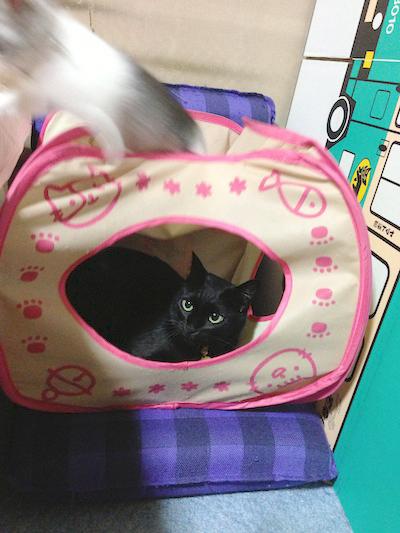 cats008.jpg
