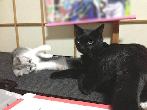 cats010.jpg