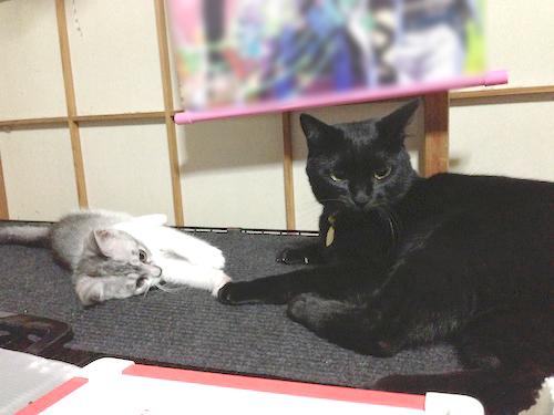 cats011.jpg