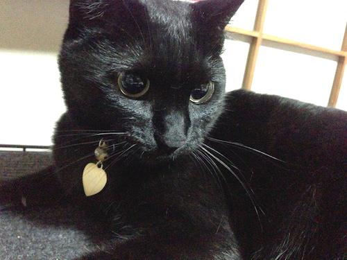 cats012.jpg