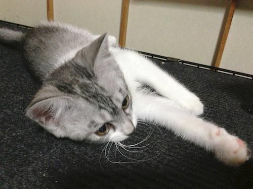 cats013.jpg