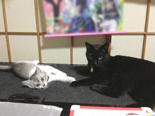 cats014.jpg