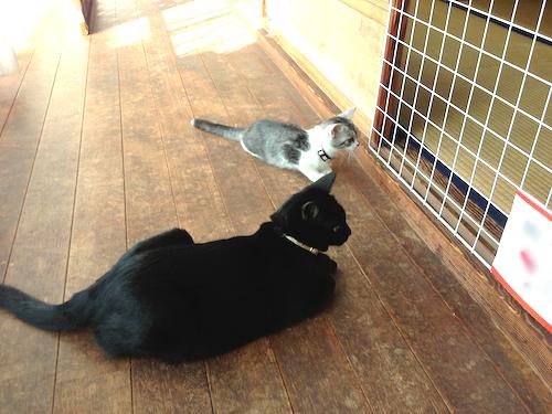 cats016.jpg