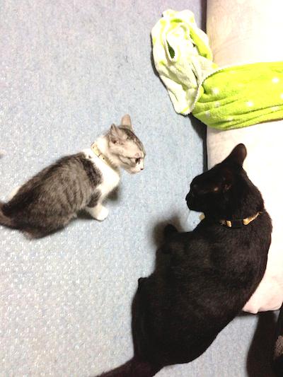cats018.jpg