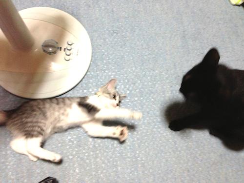 cats021.jpg