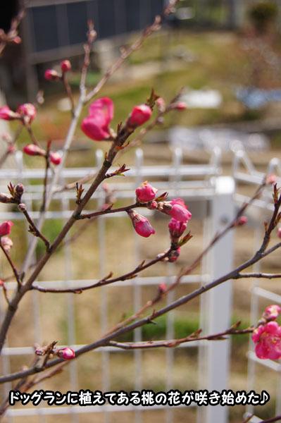 春はすぐそこ1