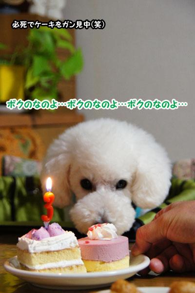 Birthday♪5