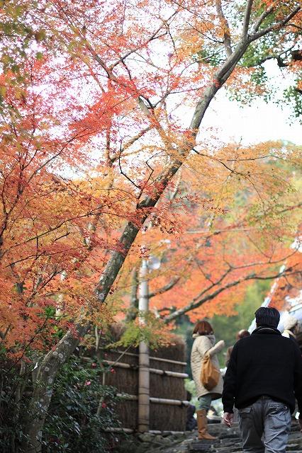IMG_7655鈴虫寺