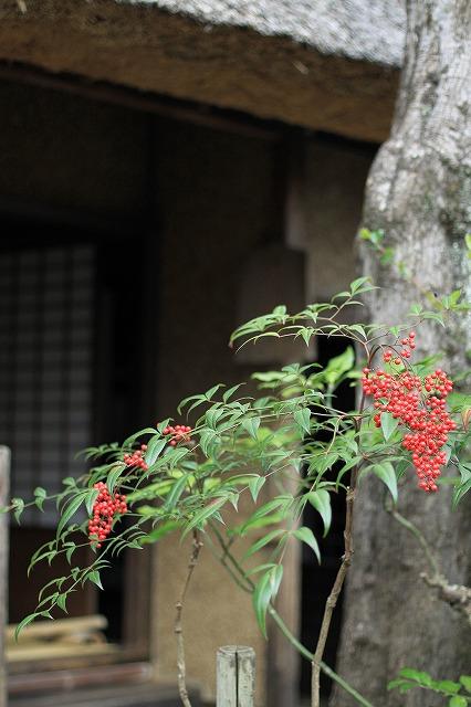 IMG_7690落柿舎