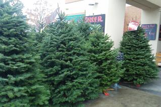 Christmas Trees avalable at store