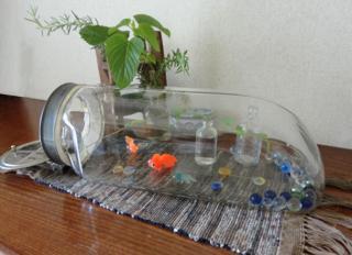 金魚ディスプレイ
