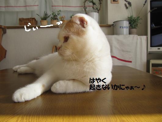IMG_3289_ccc.jpg