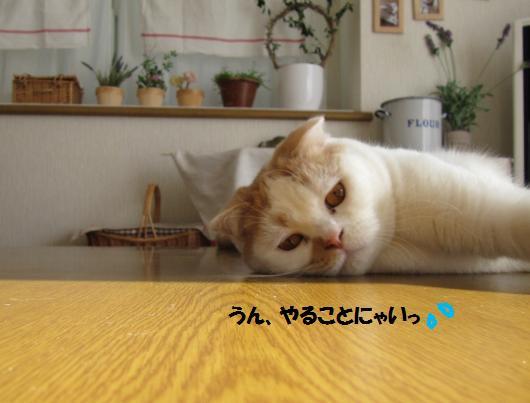 IMG_3291_cc.jpg