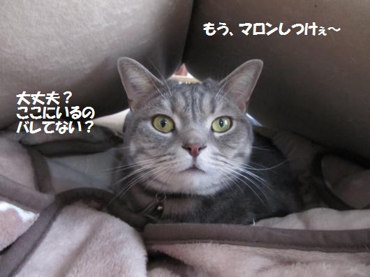 IMG_3408_cc.jpg