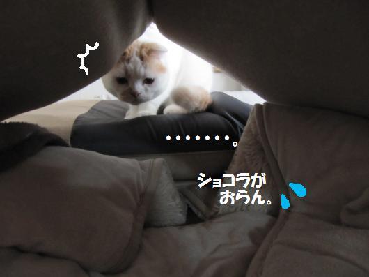 IMG_3421_cc.jpg