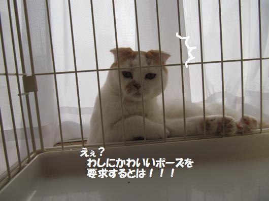 IMG_3505_cc.jpg