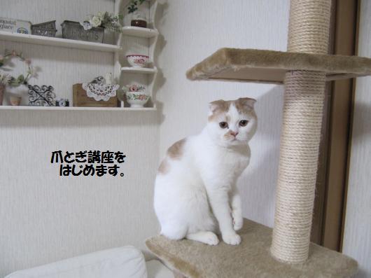 IMG_3650_cc.jpg