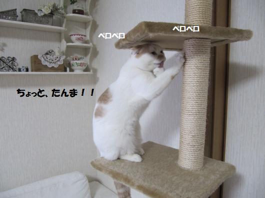 IMG_3657_cc.jpg
