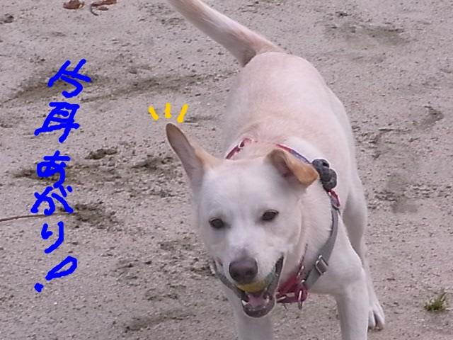 RIMG0054_20110526212854.jpg