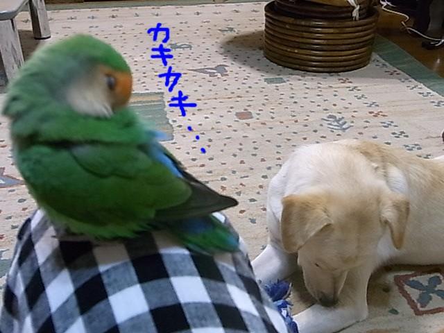 RIMG0169_20110603200606.jpg