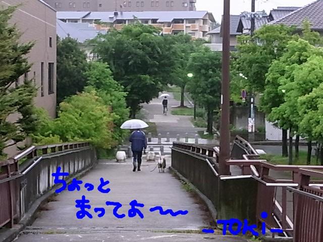RIMG0516.jpg